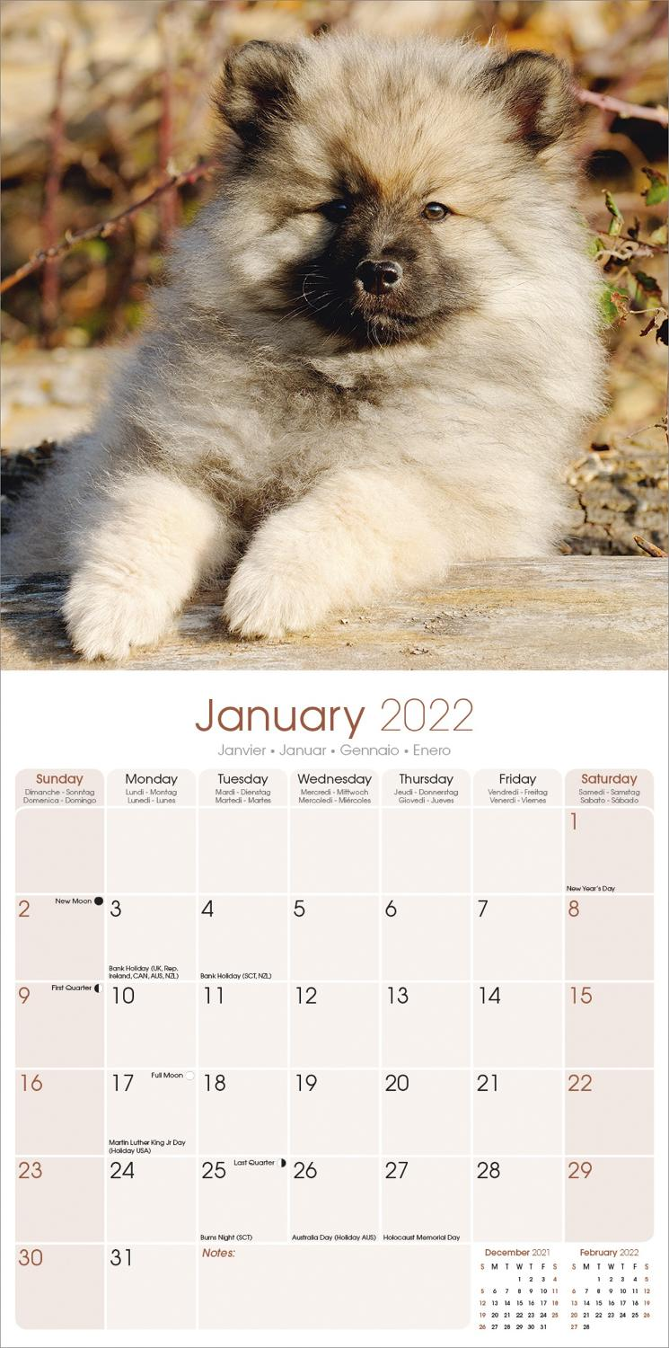 Keeshond 2021 A5 Week Per View Diary DOG SHOW DATES//APPOINTMENT